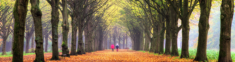 Death Benefits page - couple walking in the forest in autum