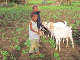 Ethical Investments - Children and goats